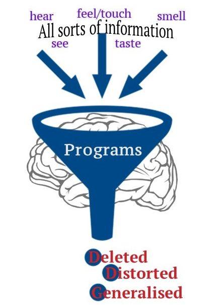 brain programs