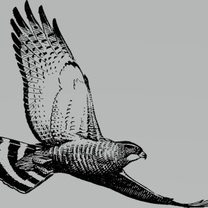hawk-clarity